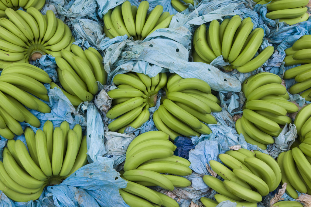 Bunches of bananas on top of dried blue banana leaves