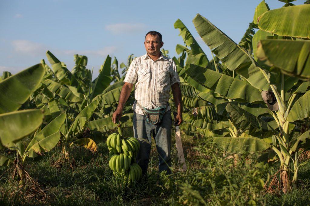 Roberto standing on his banana farm